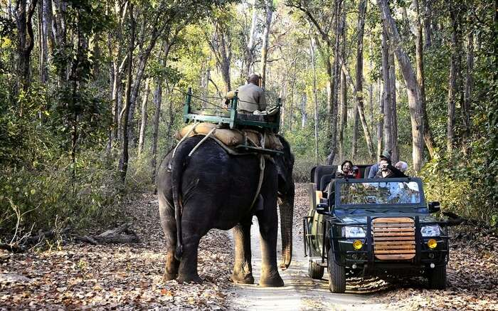Tourists taking a safari ride in Kanha National Park