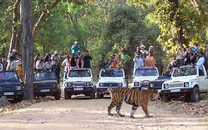 acj-2208-kanha-national-park (8)