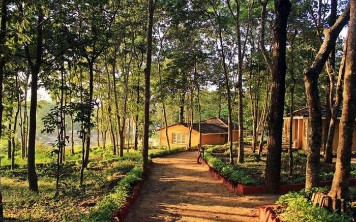 Path leading to a house in Kanha National Park in Madhya Pradesh