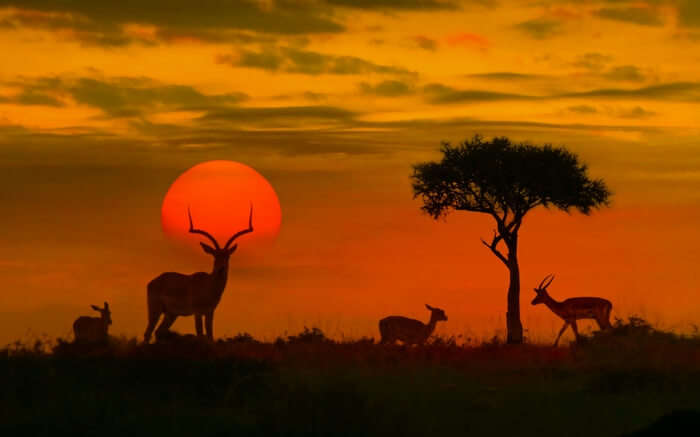 Animals standing in Kruger National Park at sunset