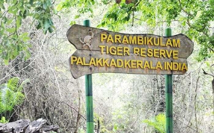 acj-2908-parambikulam-tiger-reserve- (1)