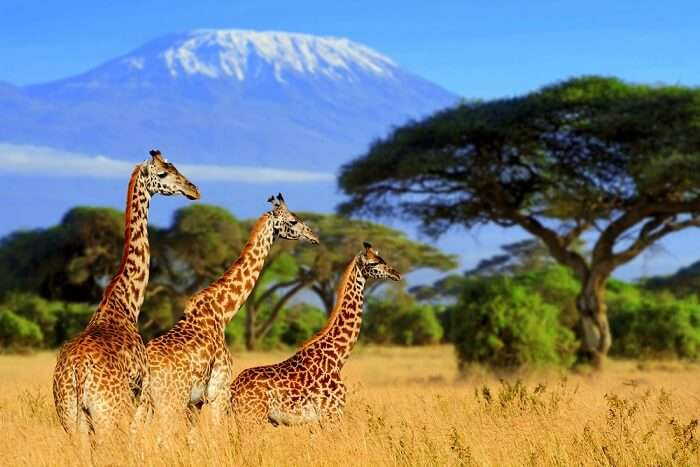best safari in south africa