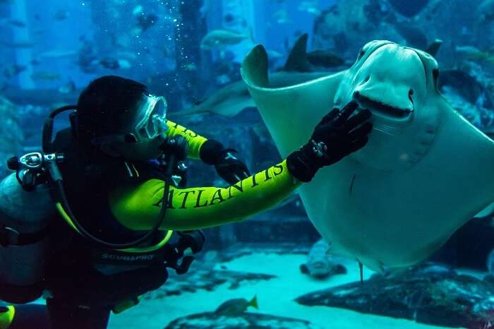 explore dubai's marine life at lost wonders