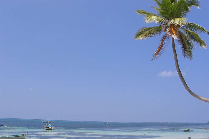 A palm tree at Kavaratti Beach with wooden boats in the sea