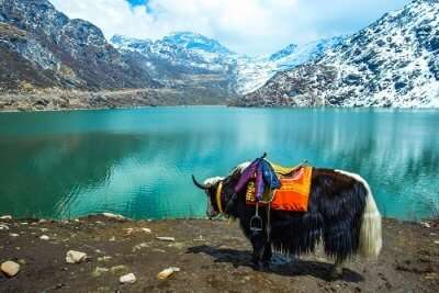 ride a yak in sikkim
