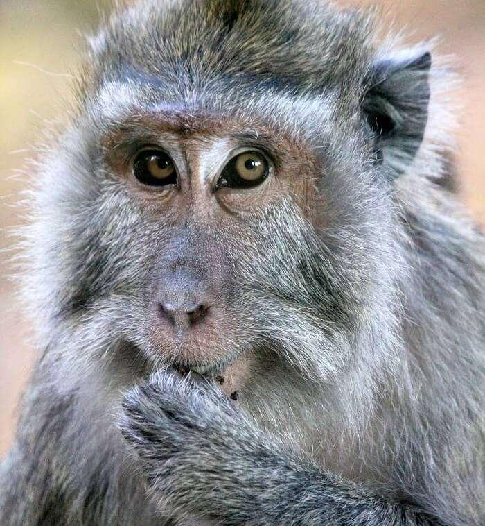 monkeys in Casela Nature Park, Mauritius