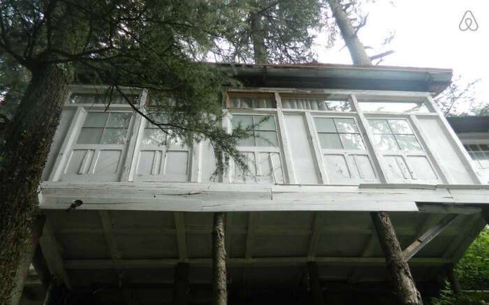 A beautiful Finnish Cottage perched at the top of a tree in Shimla