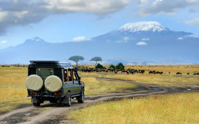 A safari jeep venturing the wild at Masai Mara National Park