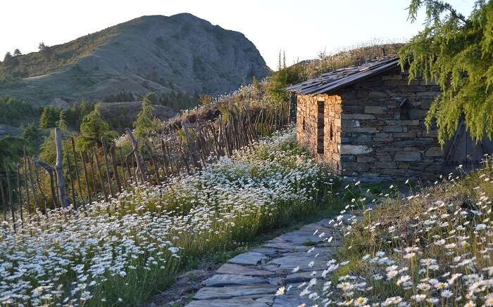 A stone cottage amid flower field