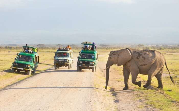 An elephant crossing the road as tourists in jeep safari watch in a national park in Kenya