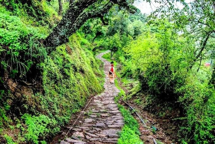 Gilbert Trail, Kasauli
