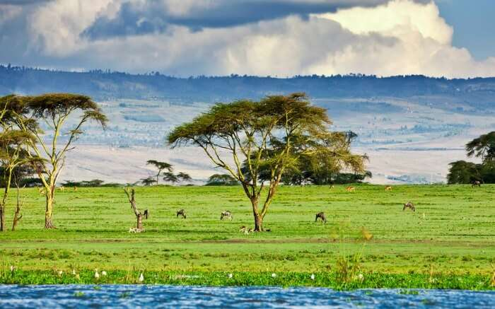 Green pasture near Lake Naivasha in Kenya in Africa