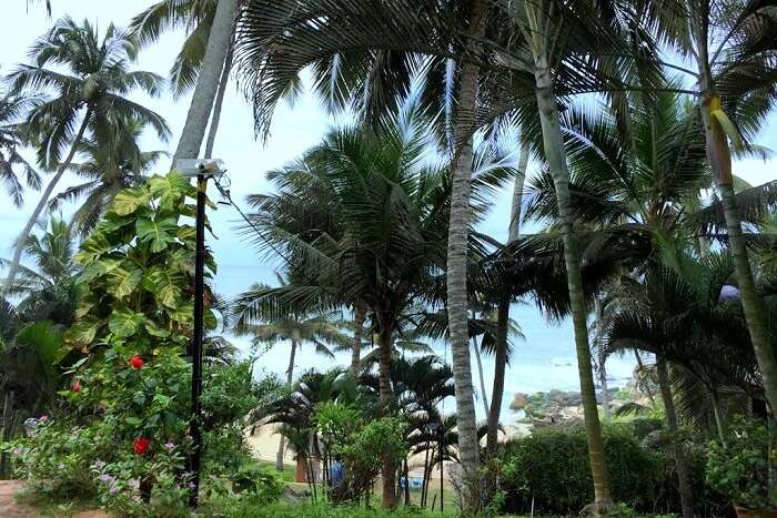 Kovalam resort palm shore
