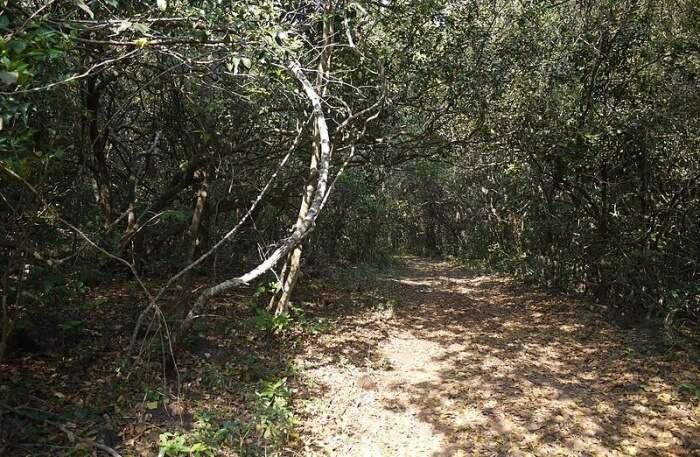 Phansad Wildlife Sanctuary View