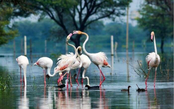 Birds enjoying playful moments in a lake in Bharatpur Bird Sanctuary