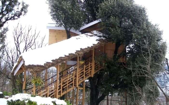 A view of Treehouse Cottage in Manali