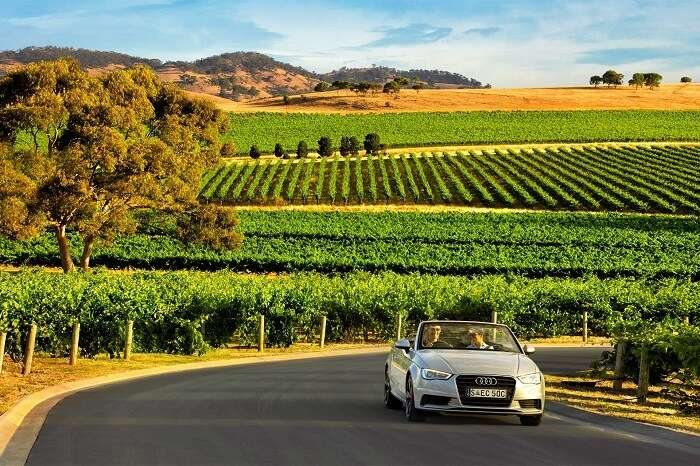 Driving in Barossa valley