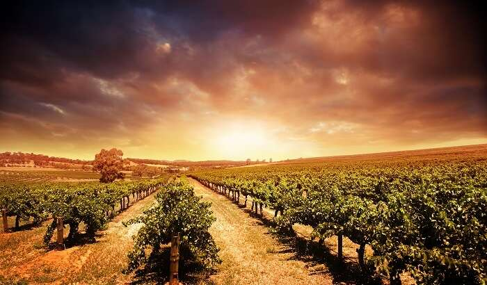 Barossa Valley in Australia