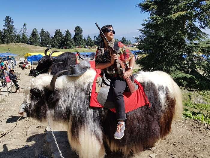 yak riding in himachal