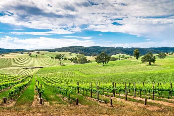 how to reach Barossa valley in Australia