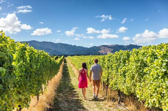 queries for Barossa valley