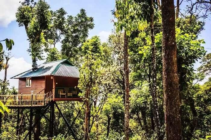 Tree houses in Kerala