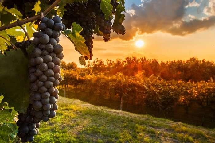 Barossa valley wineries in Australia