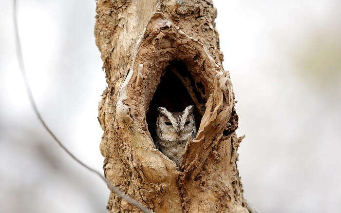 A bird sitting in the nest in Pench National Park