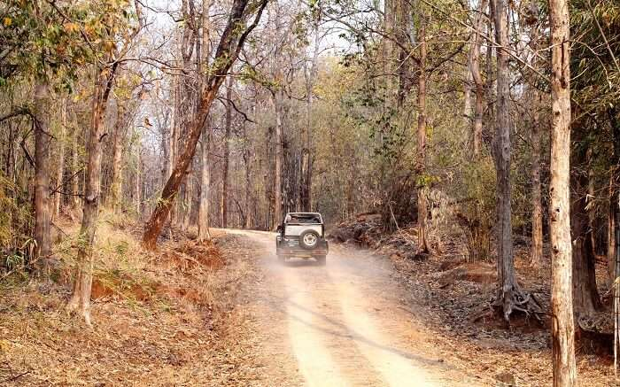 A road inside Pench National Park in Madhya Pradesh