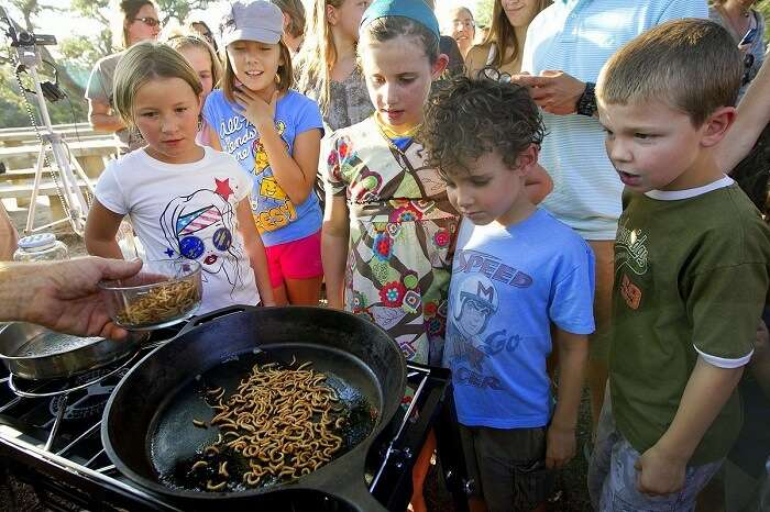 feast on bugs and worms at Bugfest
