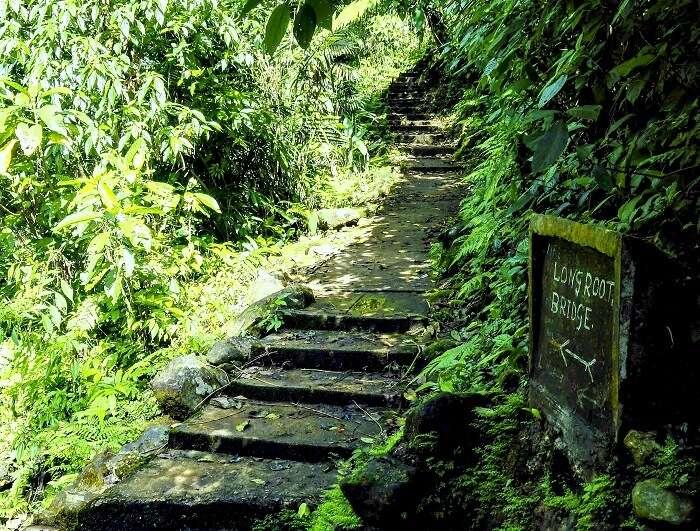 forest trek in meghalaya