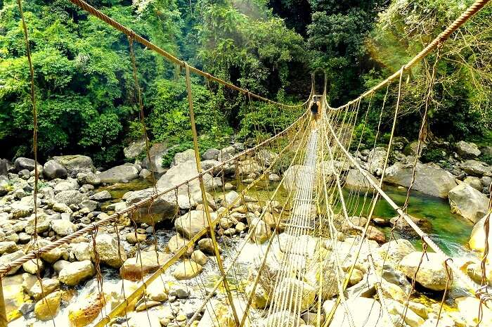 forest bridge in meghalaya