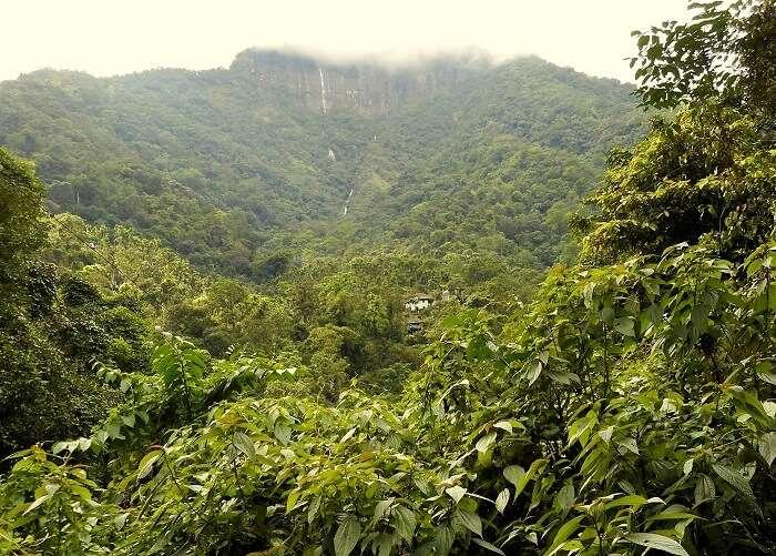 forest in meghalaya