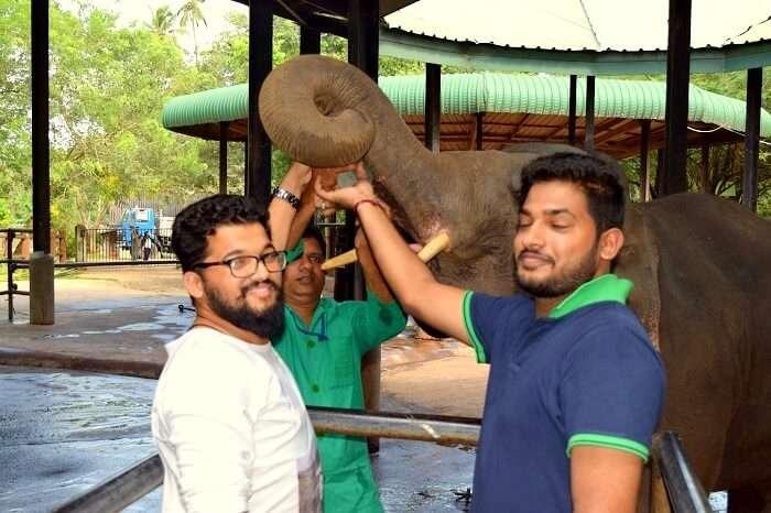 feeding elephants in Sri Lanka