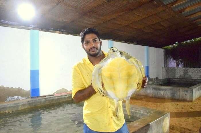 turtle hatchery in sri lanka