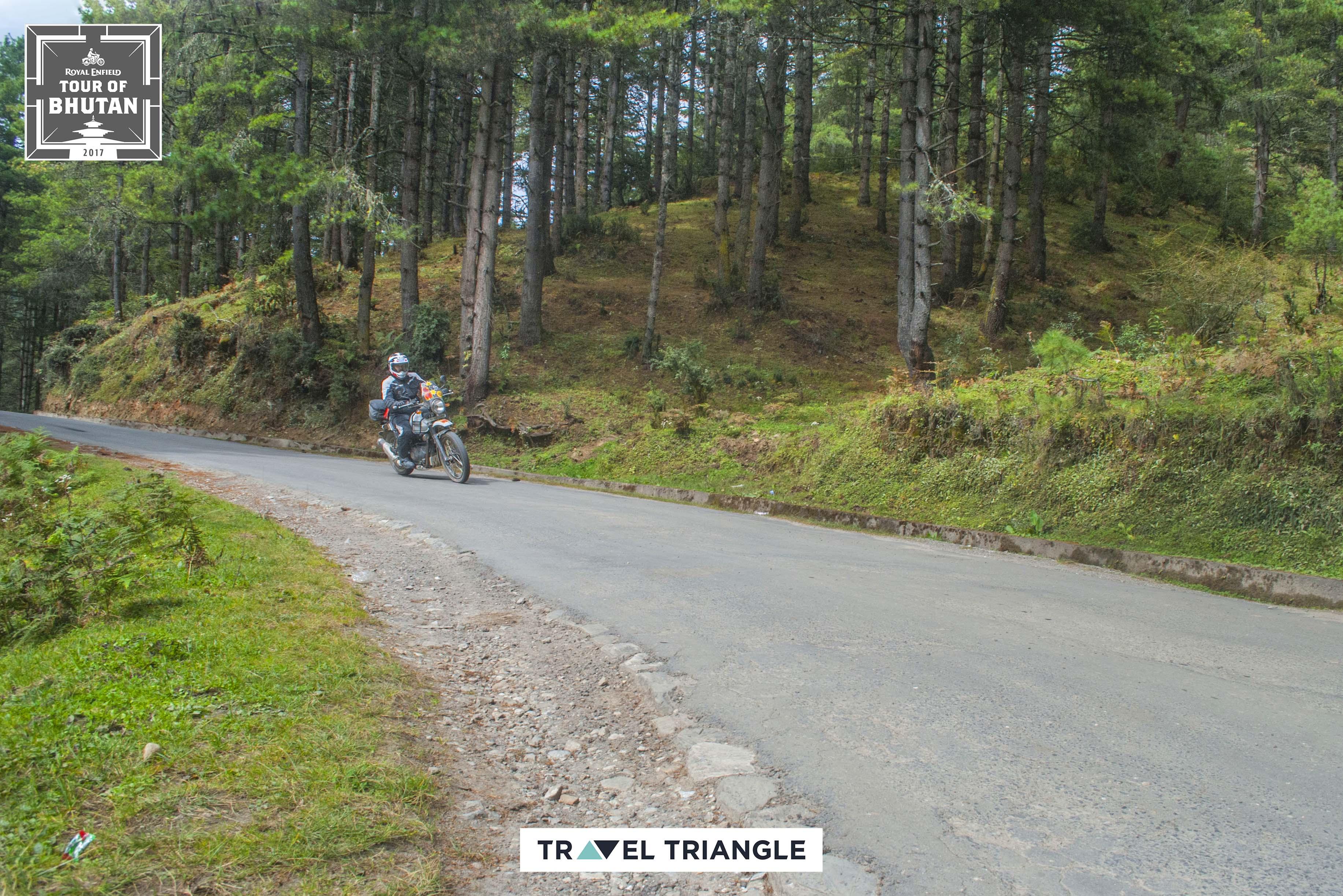 Punakha to Phobjikha: riding through lush forests