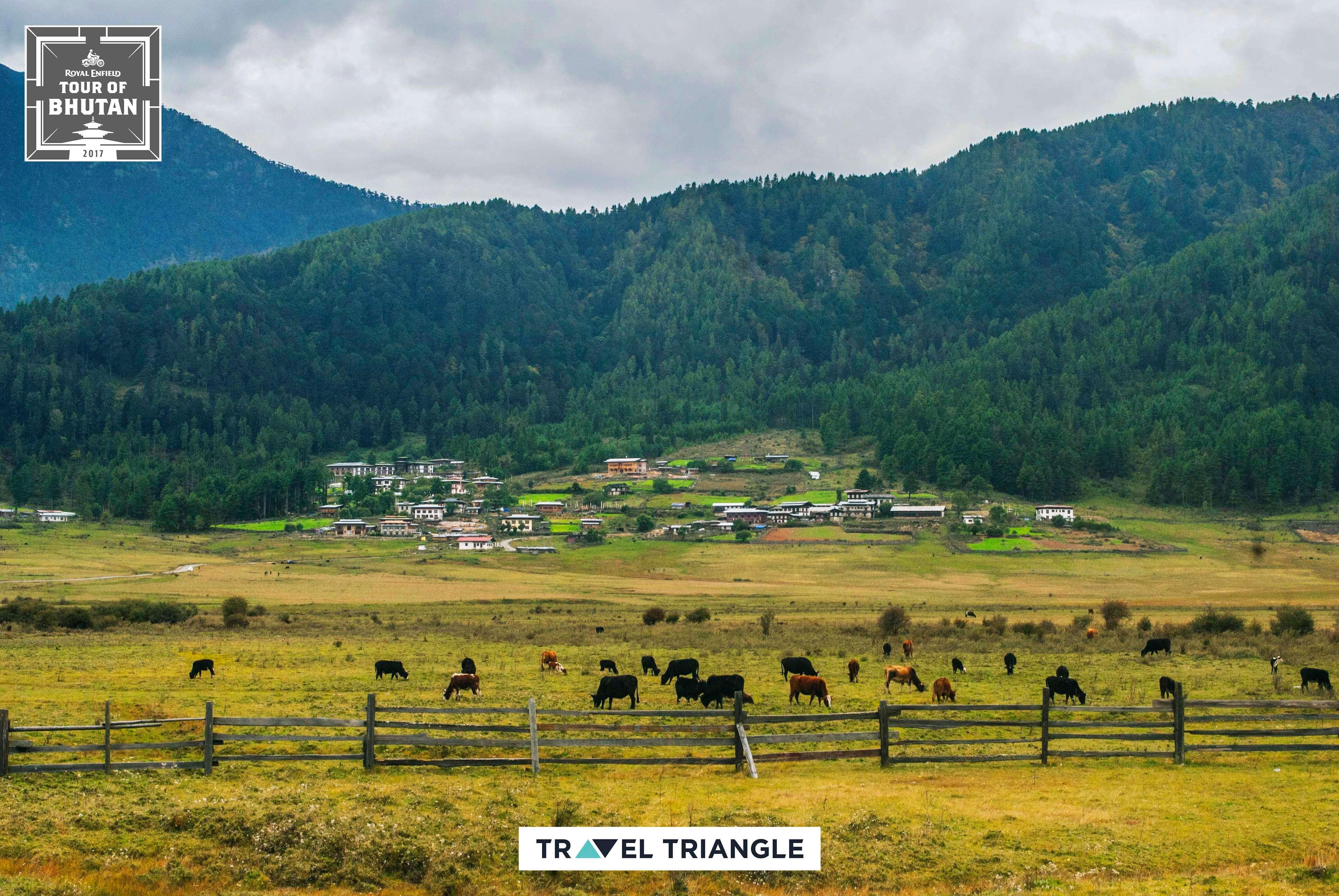 Punakha to Phobjikha: farms and hills
