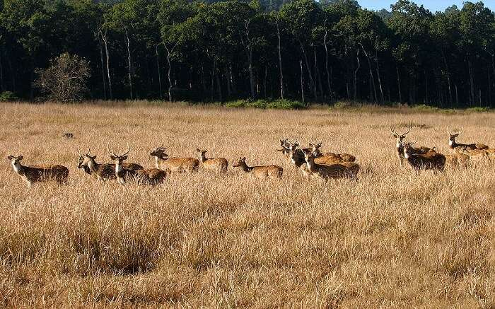 Deers in a wildlife sanctuary