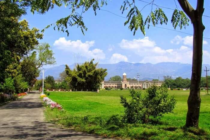 explore the environs of Forest Research Institute
