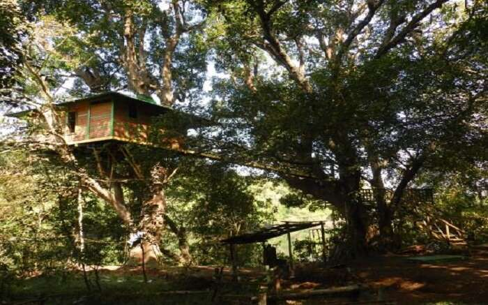Hornbill River Resort in Dandeli