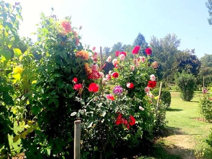 flora in Kashmir