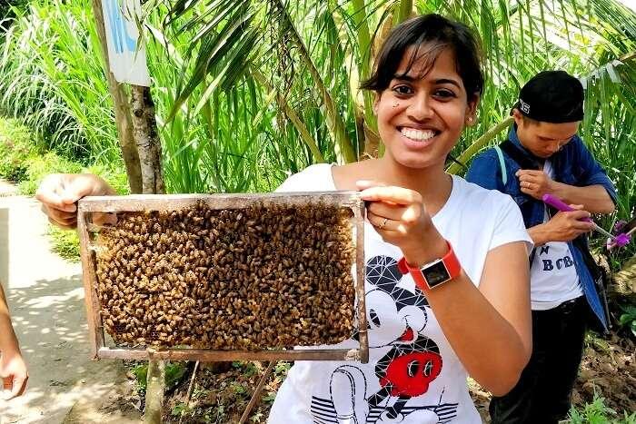 beekeeping island