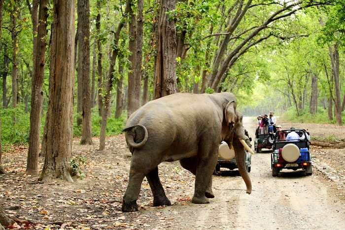 spot elephants in Jim Corbett National Park
