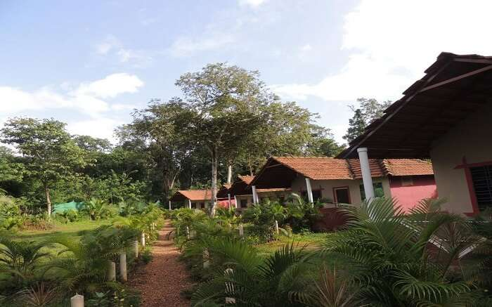 Jungle Nest Stay in Dandeli