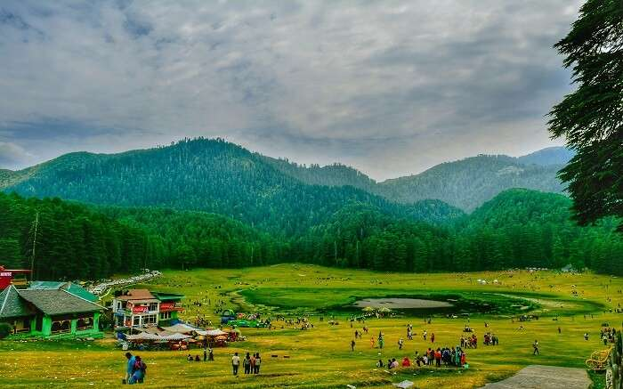 Khajjiar ground surrounded by tall deodar trees