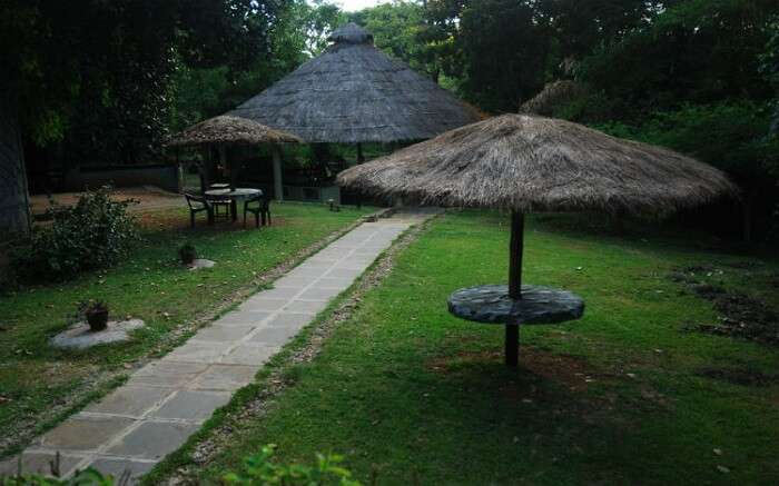 Lawn in Kali Adventure Camp