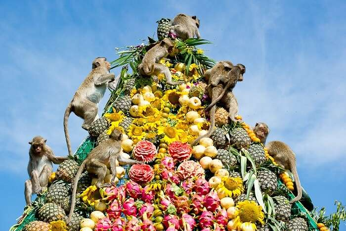 witness the amusing Thailand Monkey Buffet Festival