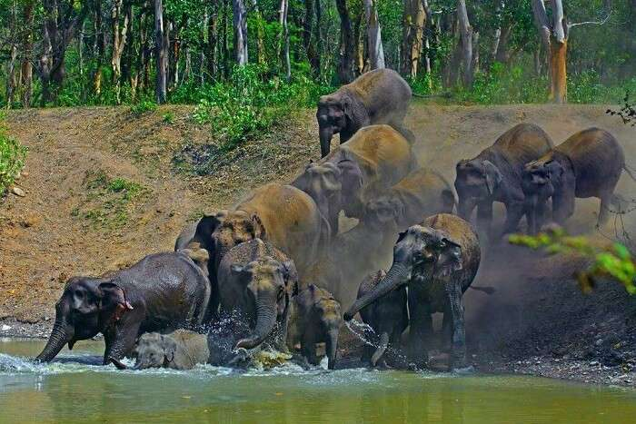 spot tigers and elephants at Rajaji National Park