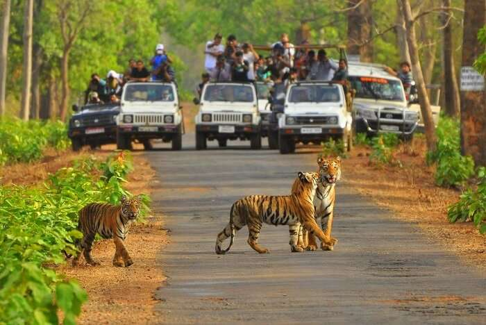 Sariska National Park in Rajasthan