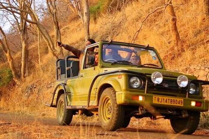 Safari & Wildlife Spotting